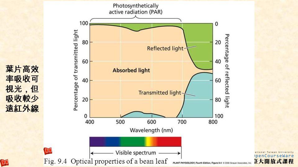 葉片高效率吸收可視光,但吸收較少遠紅外線