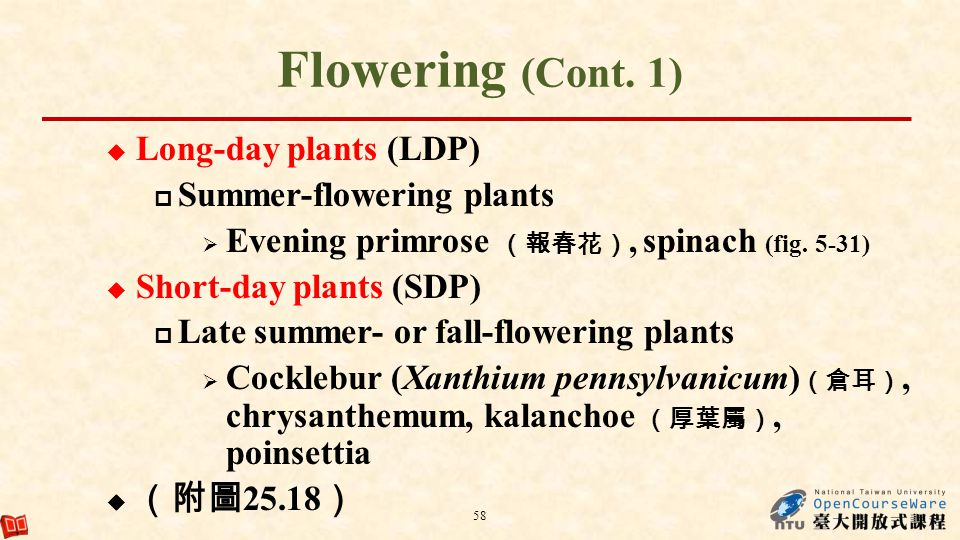Flowering (Cont. 1) Long-day plants (LDP) Summer-flowering plants