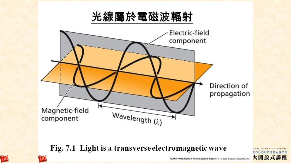 Fig. 7.1 Light is a transverse electromagnetic wave