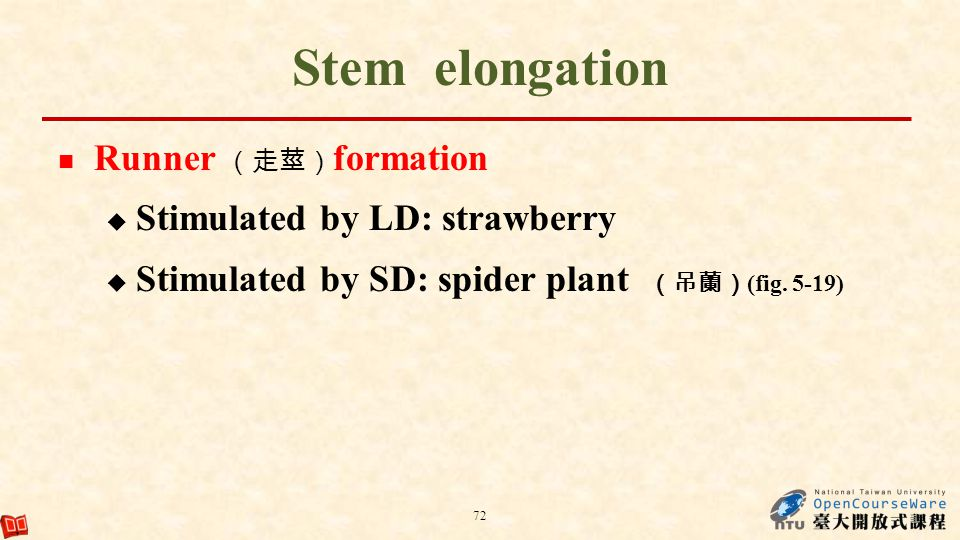 Stem elongation Runner (走莖)formation Stimulated by LD: strawberry