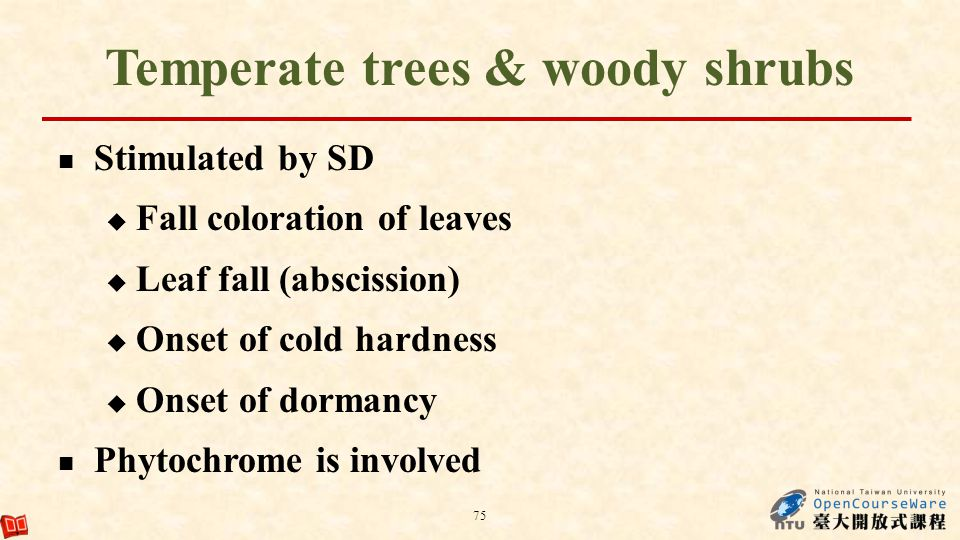 Temperate trees & woody shrubs