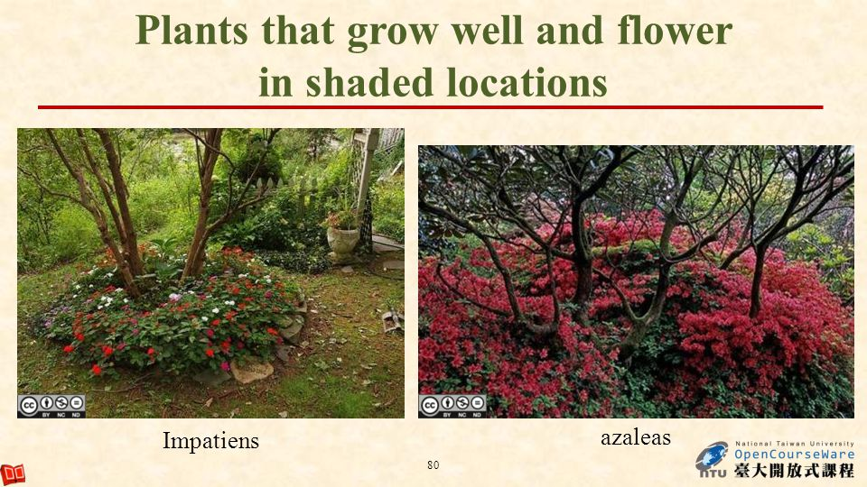 Plants that grow well and flower in shaded locations