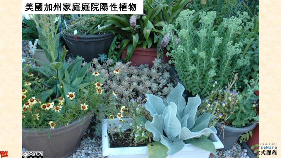 美國加州家庭庭院陽性植物