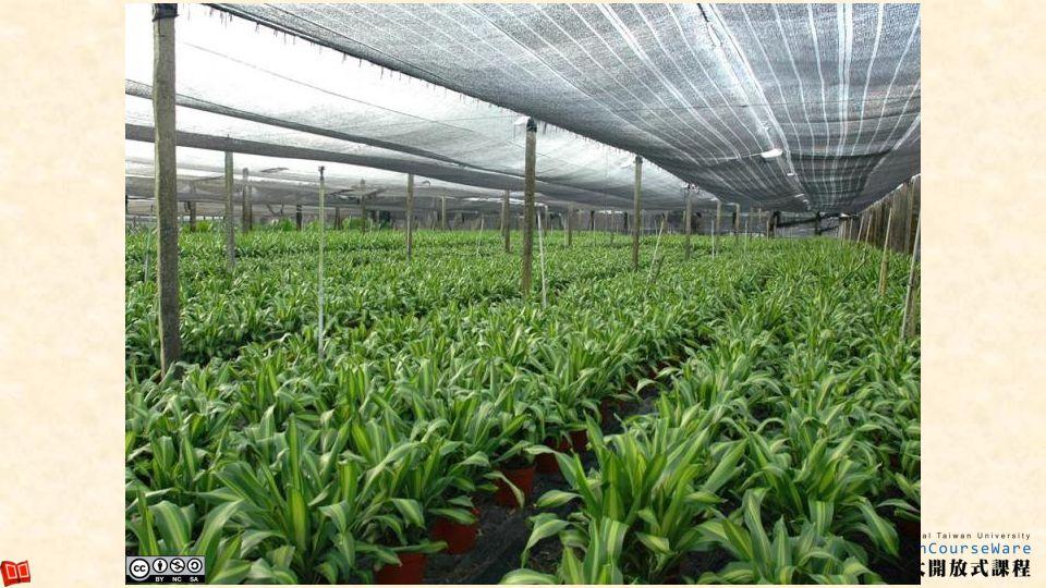 海南觀葉植物生產圃