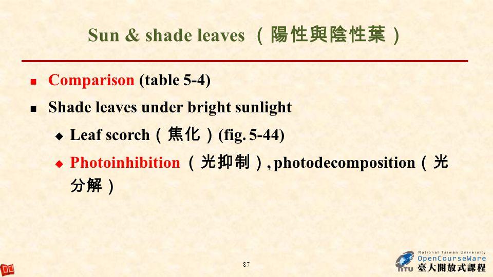 Sun & shade leaves (陽性與陰性葉)