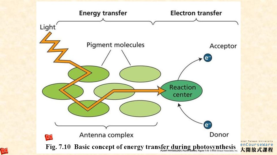 Fig. 7.10 Basic concept of energy transfer during photosynthesis