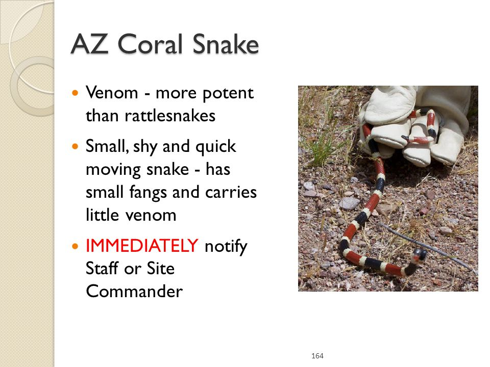 AZ Coral Snake Venom - more potent than rattlesnakes