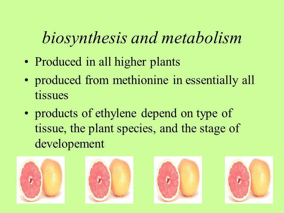 biosynthesis and metabolism