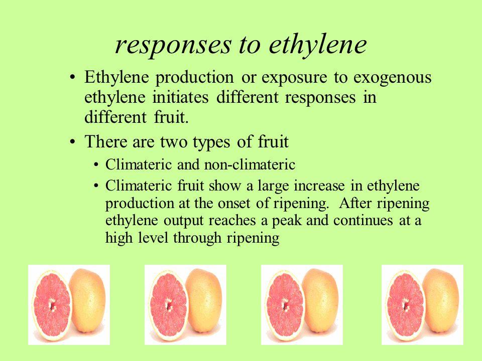 responses to ethylene Ethylene production or exposure to exogenous ethylene initiates different responses in different fruit.