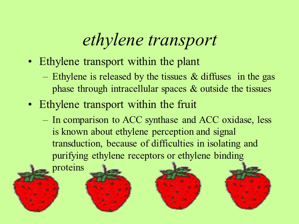 ethylene transport Ethylene transport within the plant
