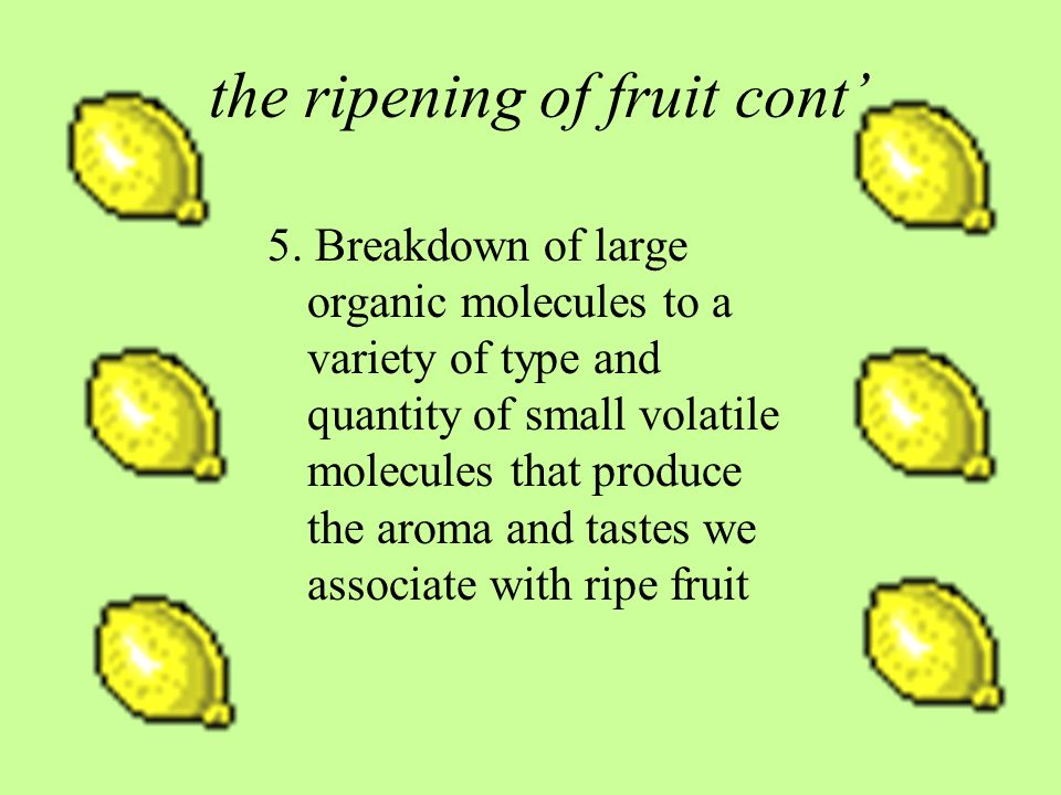 the ripening of fruit cont'