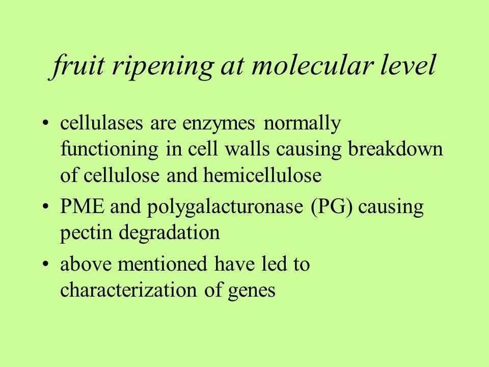 fruit ripening at molecular level