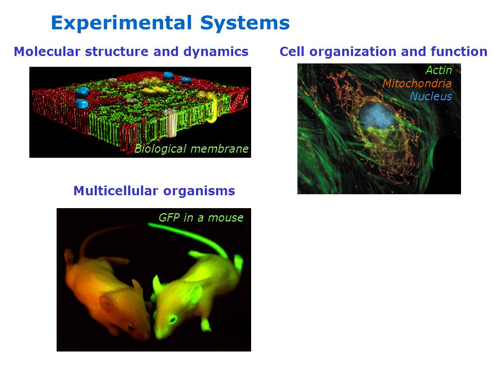 Experimental Systems Molecular structure and dynamics