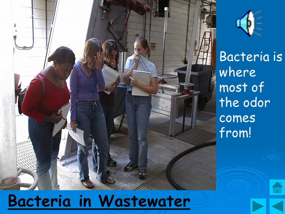 Bacteria in Wastewater