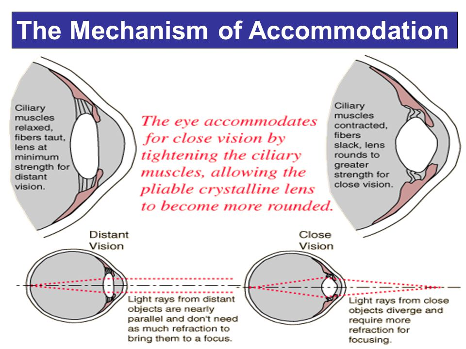 The Mechanism of Accommodation