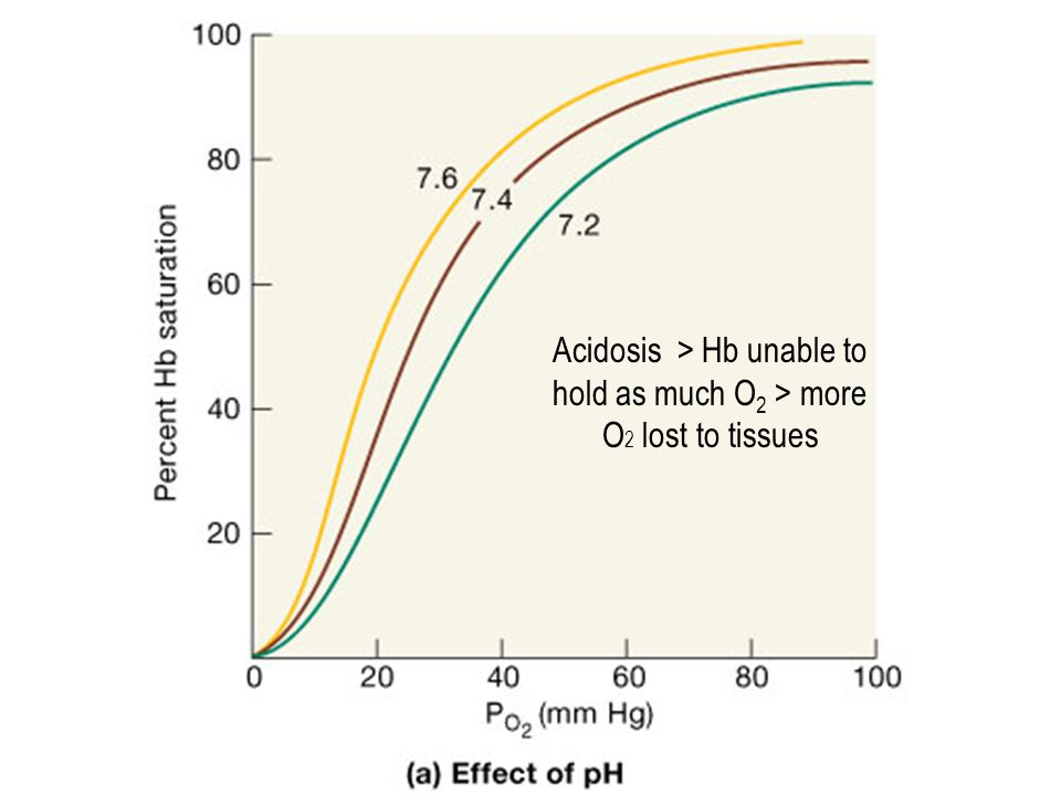 Acidosis > Hb unable to hold as much O2 > more O2 lost to tissues