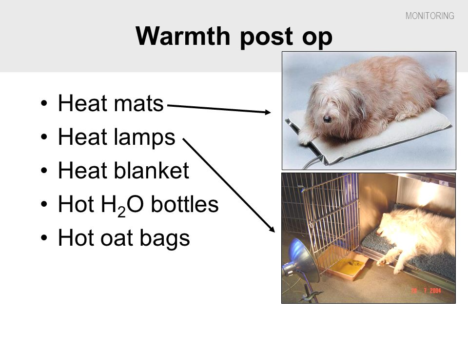 Warmth post op Heat mats Heat lamps Heat blanket Hot H2O bottles