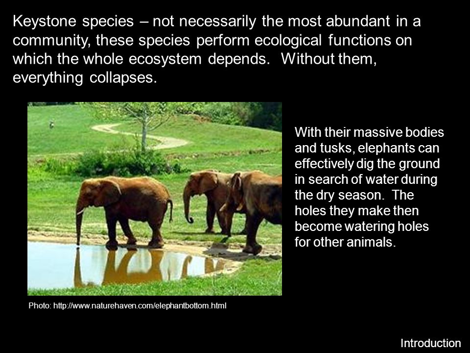 Keystone species – not necessarily the most abundant in a community, these species perform ecological functions on which the whole ecosystem depends. Without them, everything collapses.