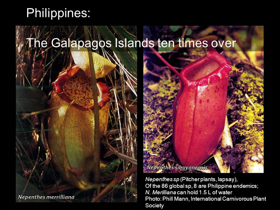 The Galapagos Islands ten times over