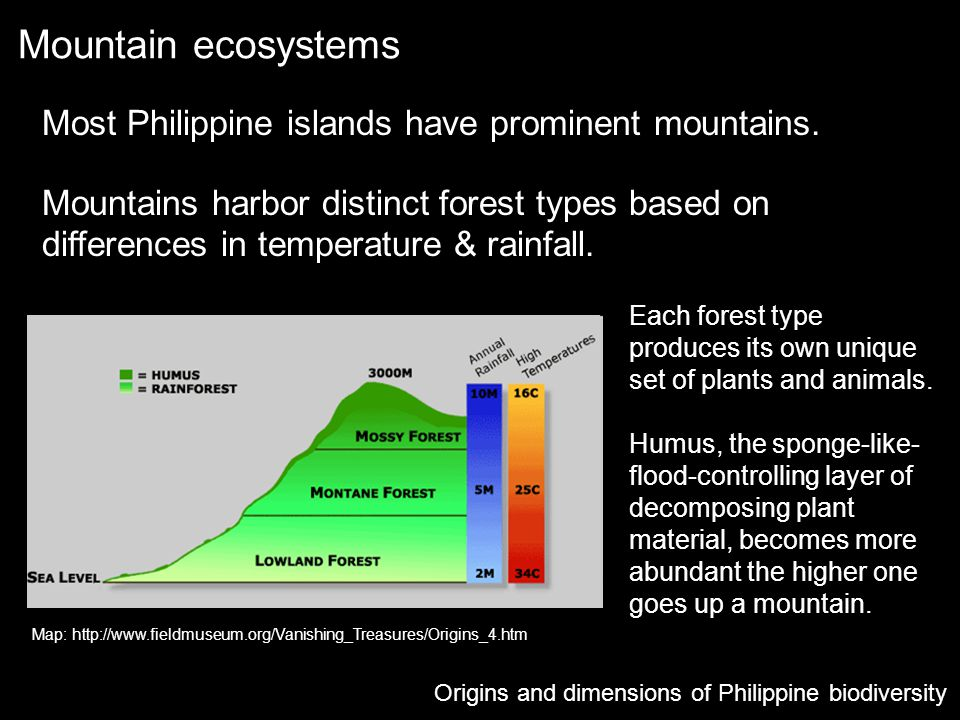 Mountain ecosystems Most Philippine islands have prominent mountains.