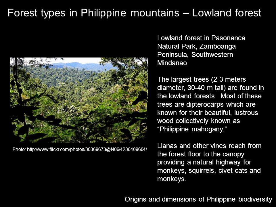 Forest types in Philippine mountains – Lowland forest