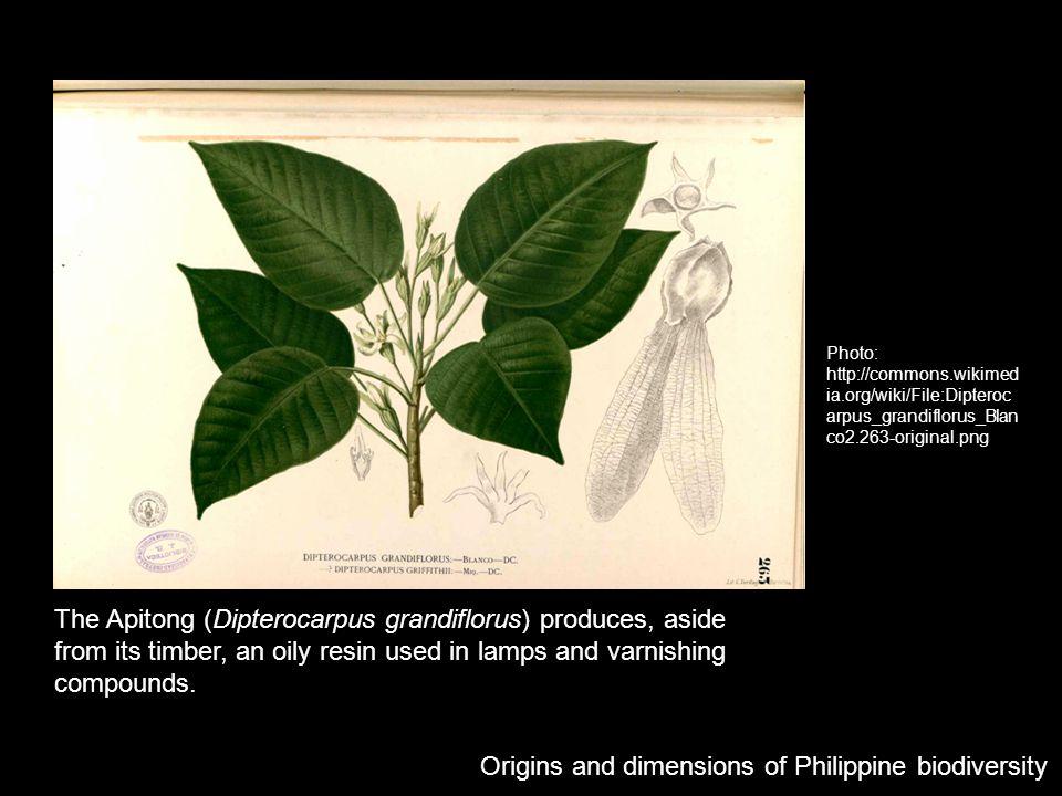 Origins and dimensions of Philippine biodiversity