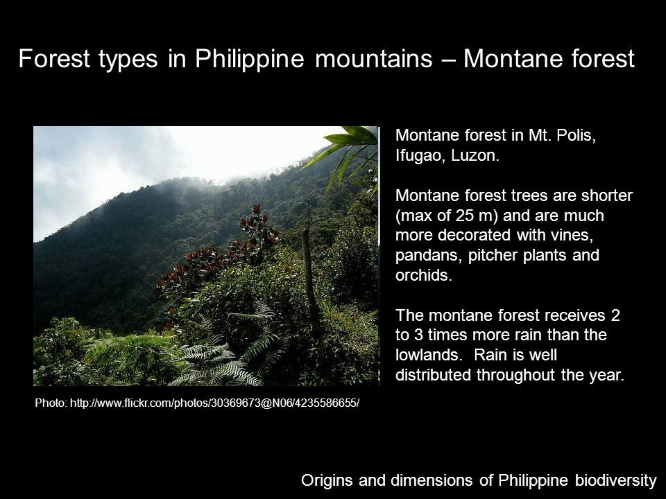 Forest types in Philippine mountains – Montane forest