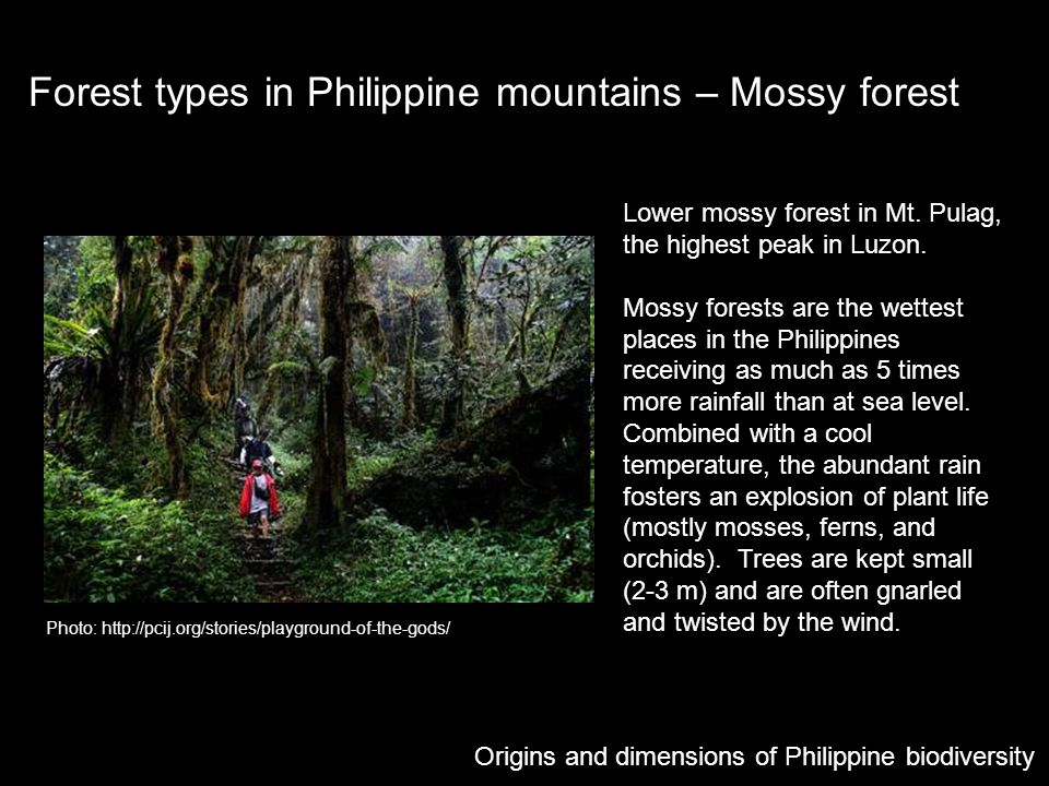 Forest types in Philippine mountains – Mossy forest