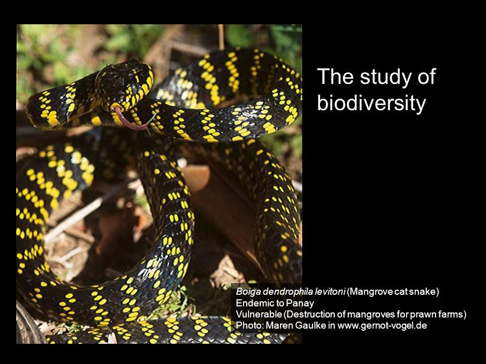 The study of biodiversity