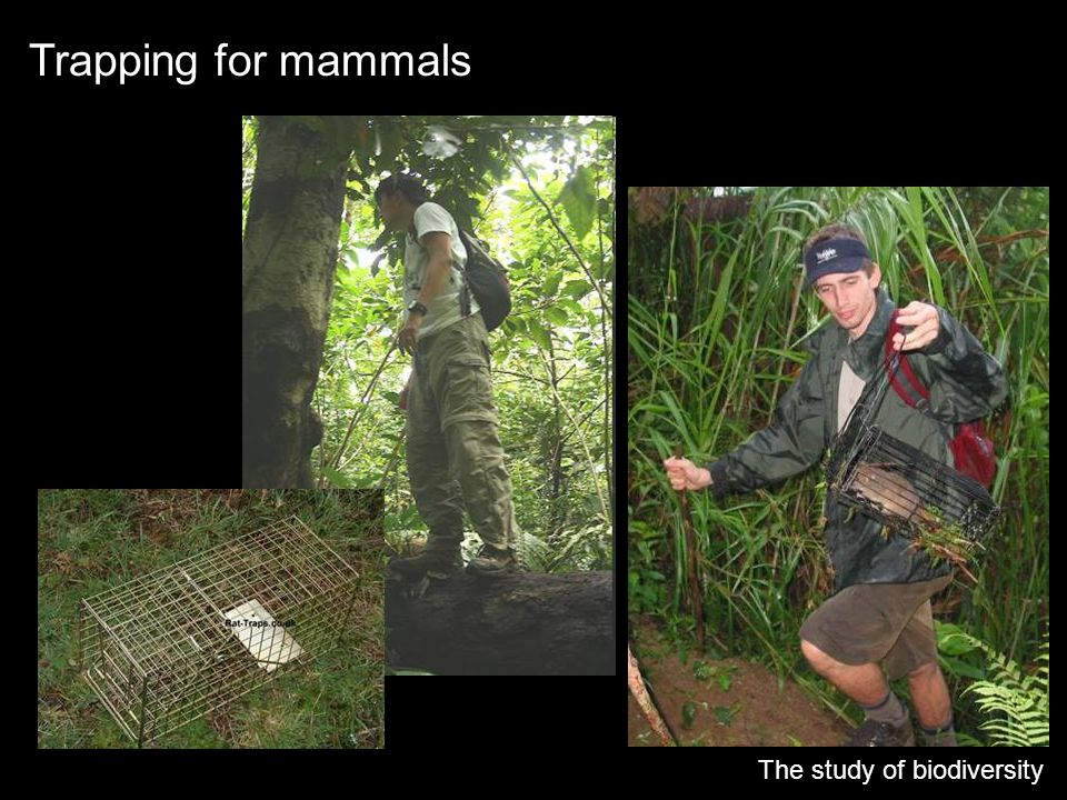 Trapping for mammals The study of biodiversity