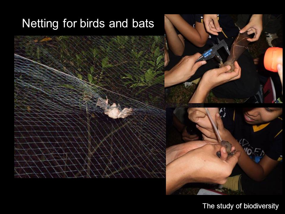 Netting for birds and bats