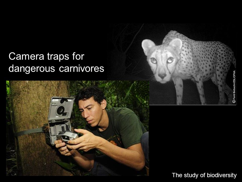 Camera traps for dangerous carnivores