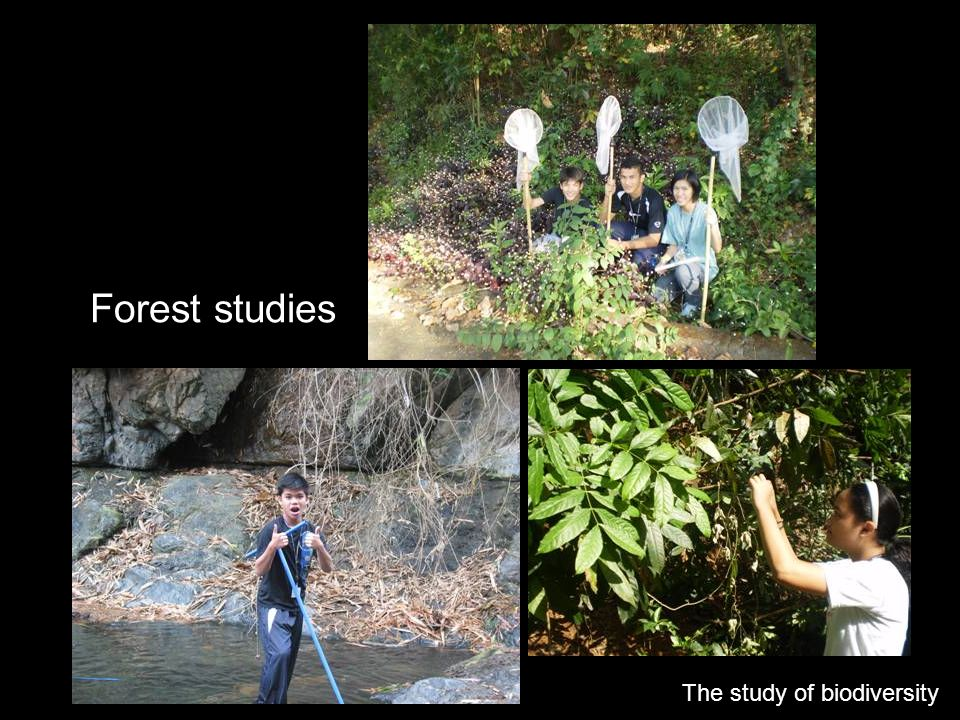 Forest studies The study of biodiversity