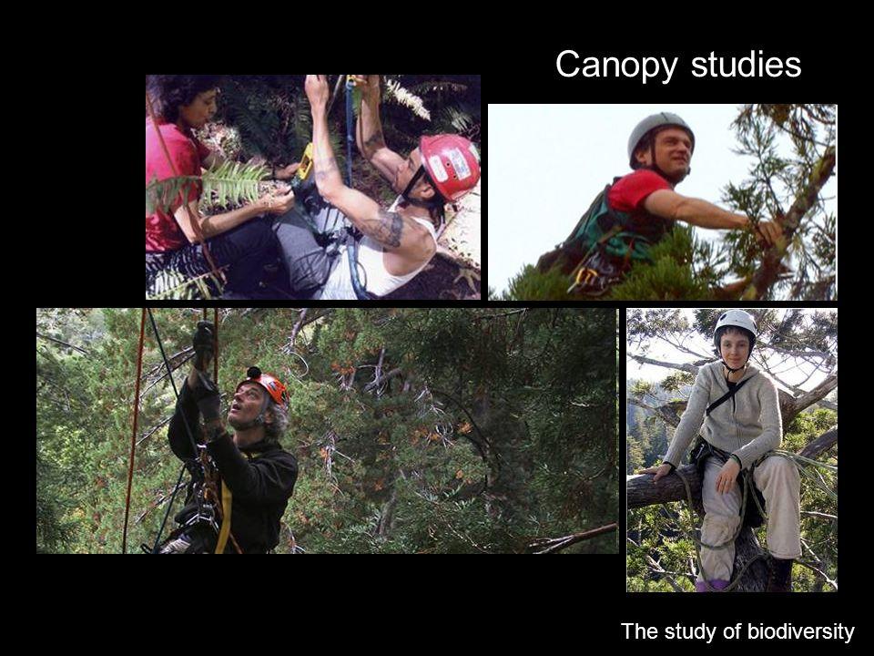 Canopy studies The study of biodiversity