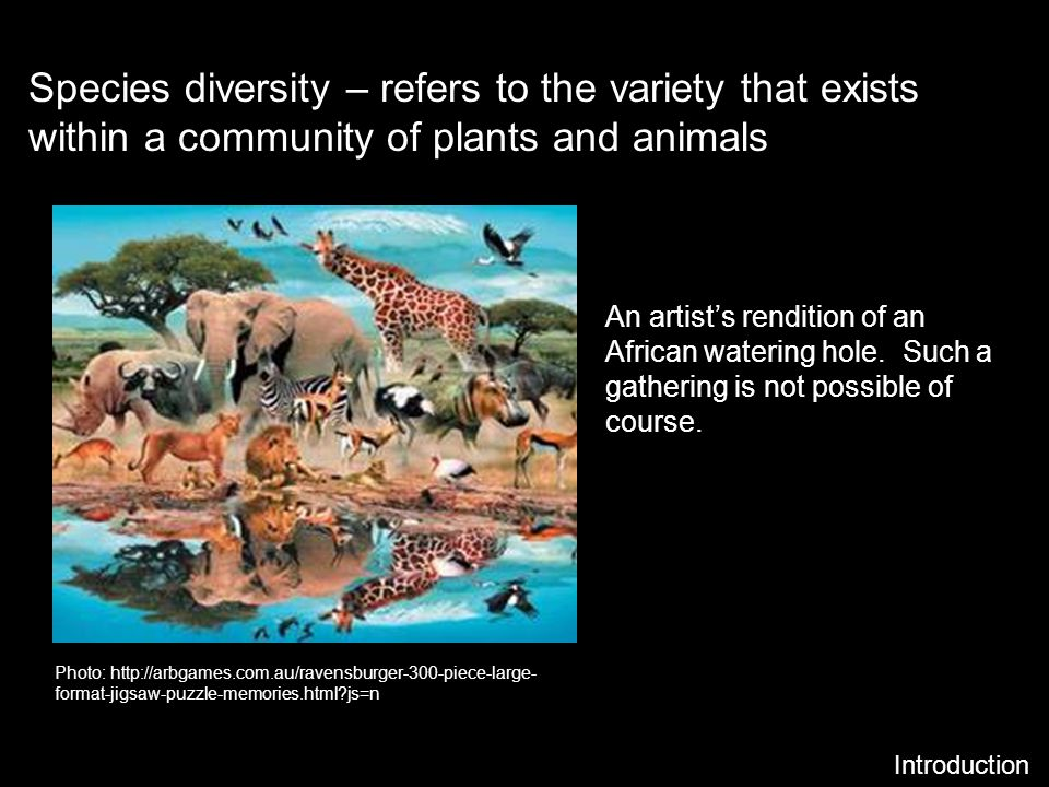 Species diversity – refers to the variety that exists within a community of plants and animals