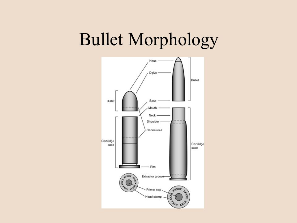 Bullet Morphology