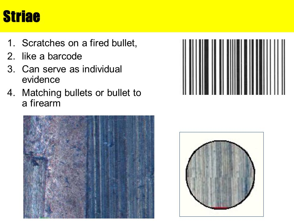 Striae Scratches on a fired bullet, like a barcode