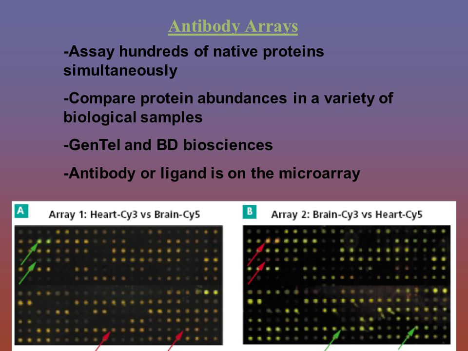 Antibody Arrays -Assay hundreds of native proteins simultaneously