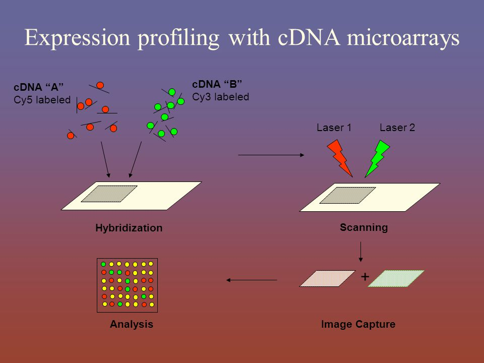 Expression profiling with cDNA microarrays