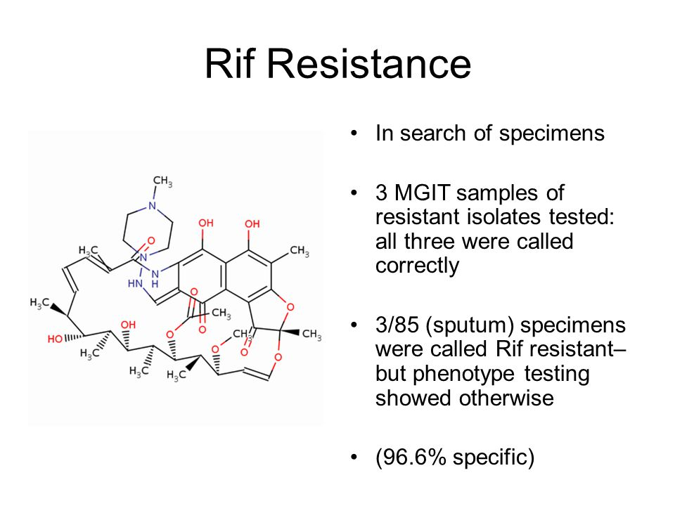 Rif Resistance In search of specimens