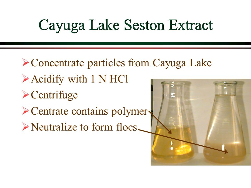 Cayuga Lake Seston Extract