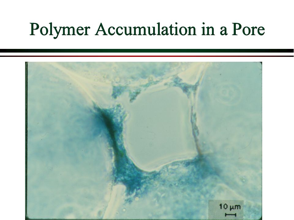 Polymer Accumulation in a Pore
