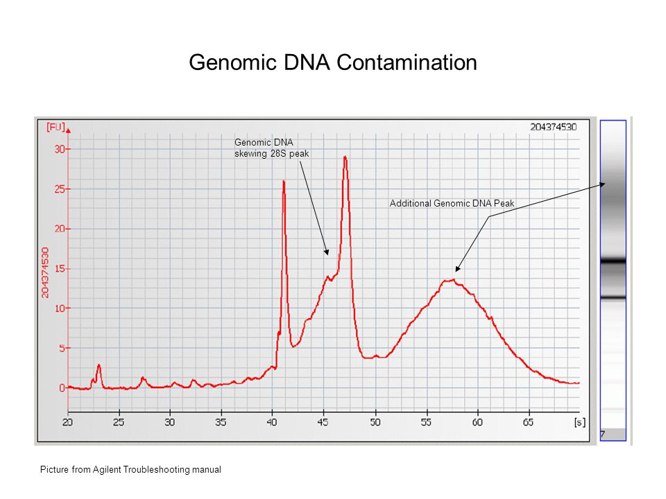 Genomic DNA Contamination