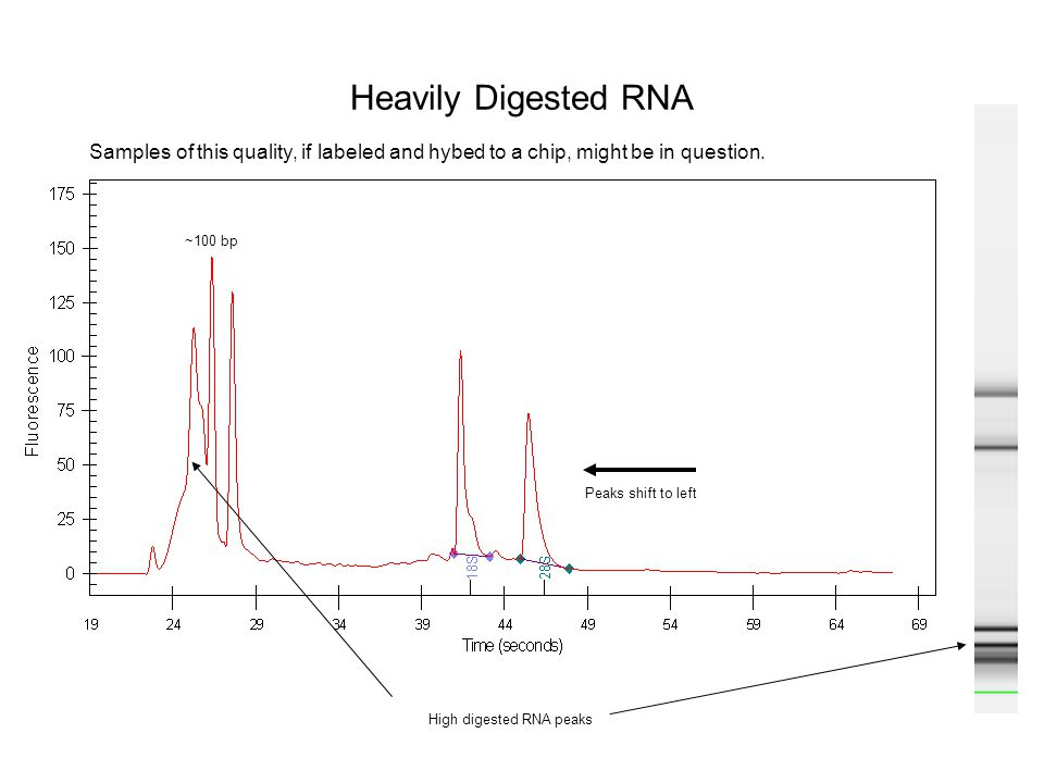 Heavily Digested RNA Samples of this quality, if labeled and hybed to a chip, might be in question.