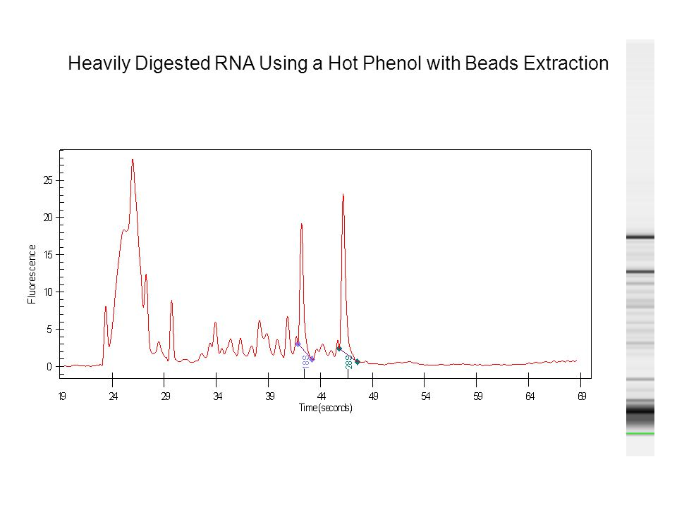 Heavily Digested RNA Using a Hot Phenol with Beads Extraction