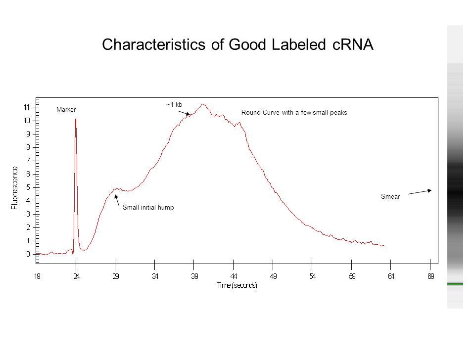 Characteristics of Good Labeled cRNA