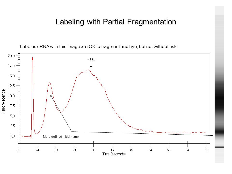 Labeling with Partial Fragmentation