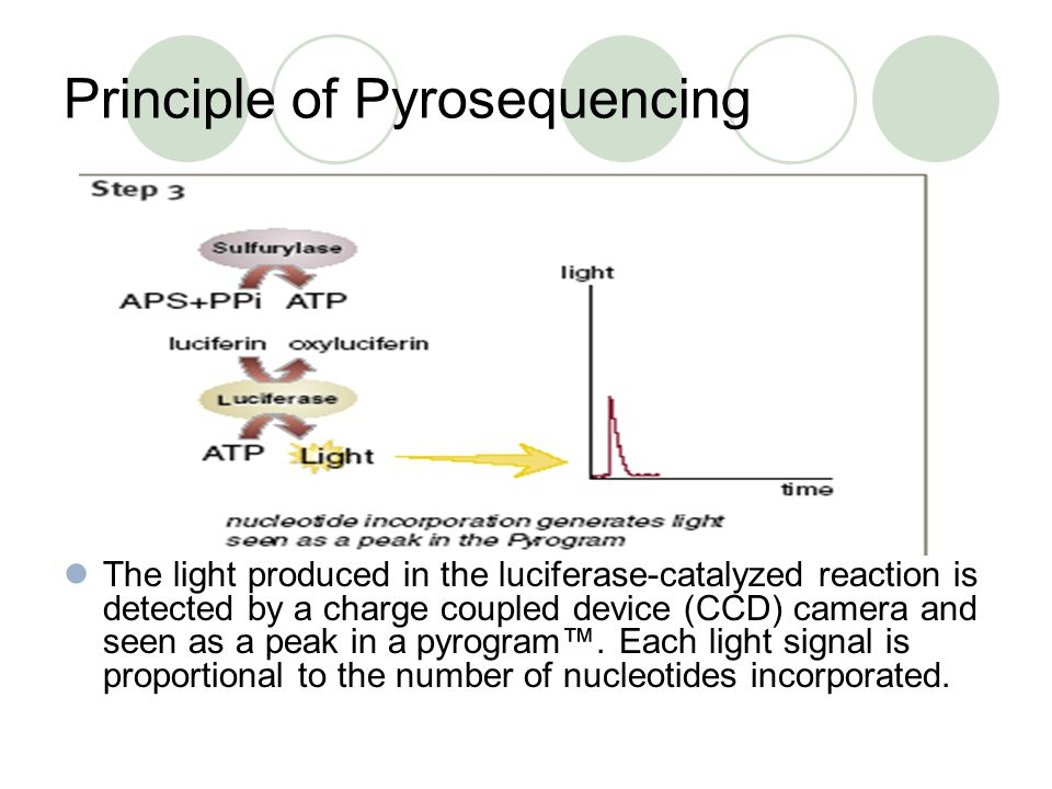 Principle of Pyrosequencing