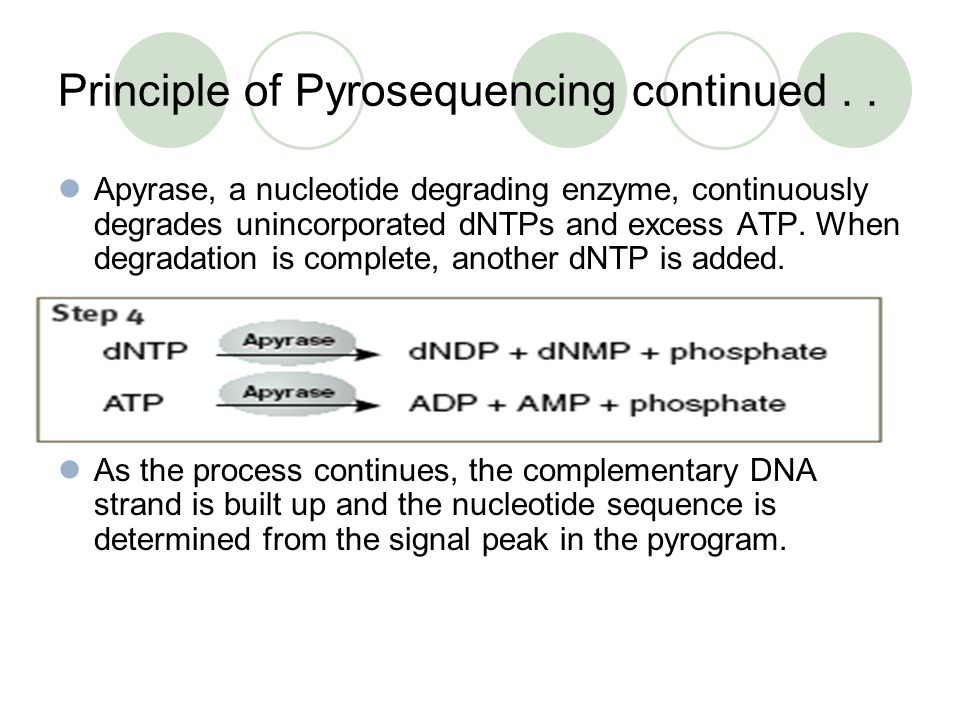 Principle of Pyrosequencing continued . .
