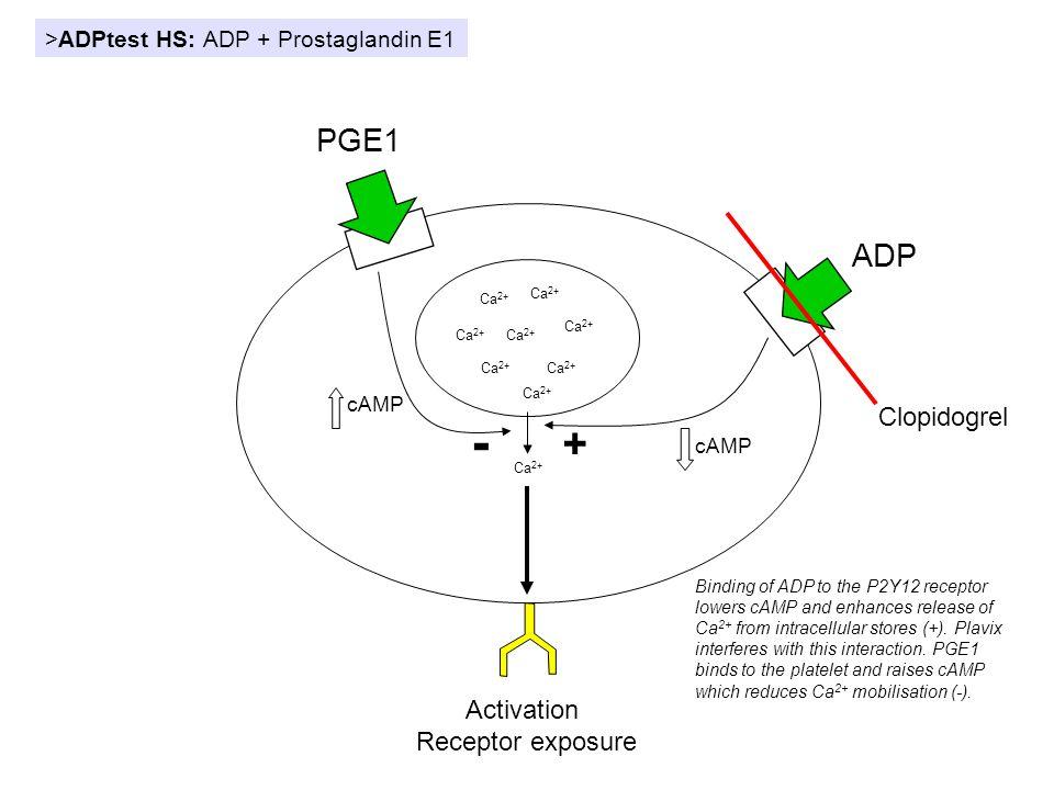 - + PGE1 ADP Clopidogrel Activation Receptor exposure